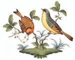 Herend Rothschild Bird Motif #7