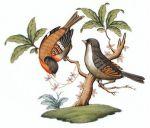 Herend Rothschild Bird Motif #12