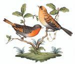 Herend Rothschild Bird Motif #9