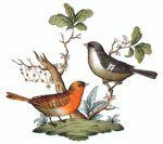 Herend Rothschild Bird Motif #5