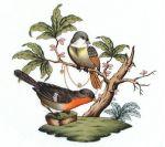Herend Rothschild Bird Motif #2