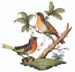 Herend Rothschild Bird Motif #8