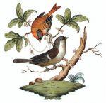 Herend Rothschild Bird Motif #4