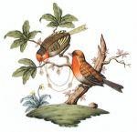 Herend Rothschild Bird Motif #10