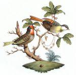 Herend Rothschild Bird Motif #11